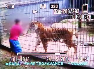 Menino-de-11-anos-atacado-por-tigre-em-zoológico-no-Paraná-tem-o-braço-amputado