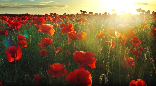 Remembrance-Sunday